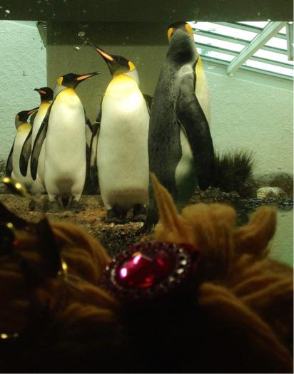 Die Pinguine sind sehr lebendig!