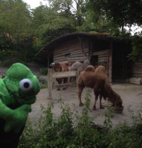 "Kamel und ""Kameleon"" :-)"