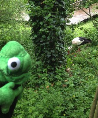 Balduin sieht GRÜN! und Storch